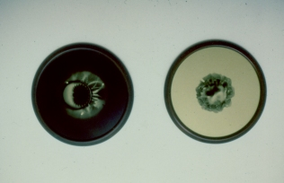 Bill Jones, Orectic Object (sign of Angels) 1988, Silver print on gold paper, 76 cm, 30 in dia; each