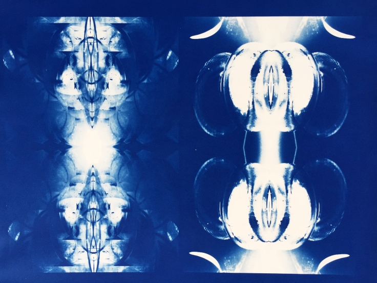 Bill Jones, specimen, (species), 2015, cyanotype, 24x30 inches
