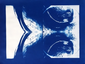 Bill Jones, specimen, (insemination), 2015, cyanotype, 24x30 inches