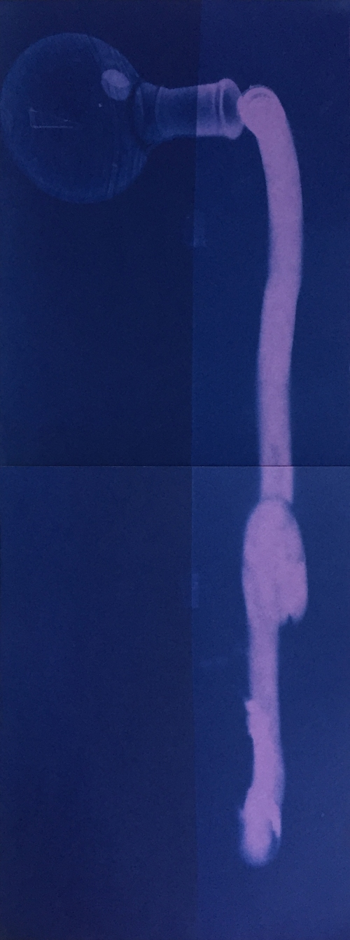 Bill Jones, Purple spill 1, 2015, unique cyanotype, 8x10 inches