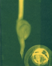 spill 15, cyanotype, 2016, 8x10 inches
