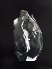 Rose noir, 2016, silver print, 20 x 24 inches