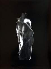 Chêne, 2016, silver print, 20 x 24 inches