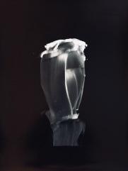 Ageratina altissima, 2016, silver print, 20 x 24 inches