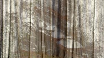 Veil, 2018, Iris print, 24 x 42 inches