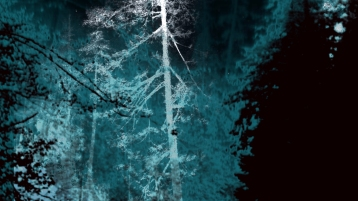 Night Hawk,Forest for the Trees,Archival print, 24 x 48 inches, 2019
